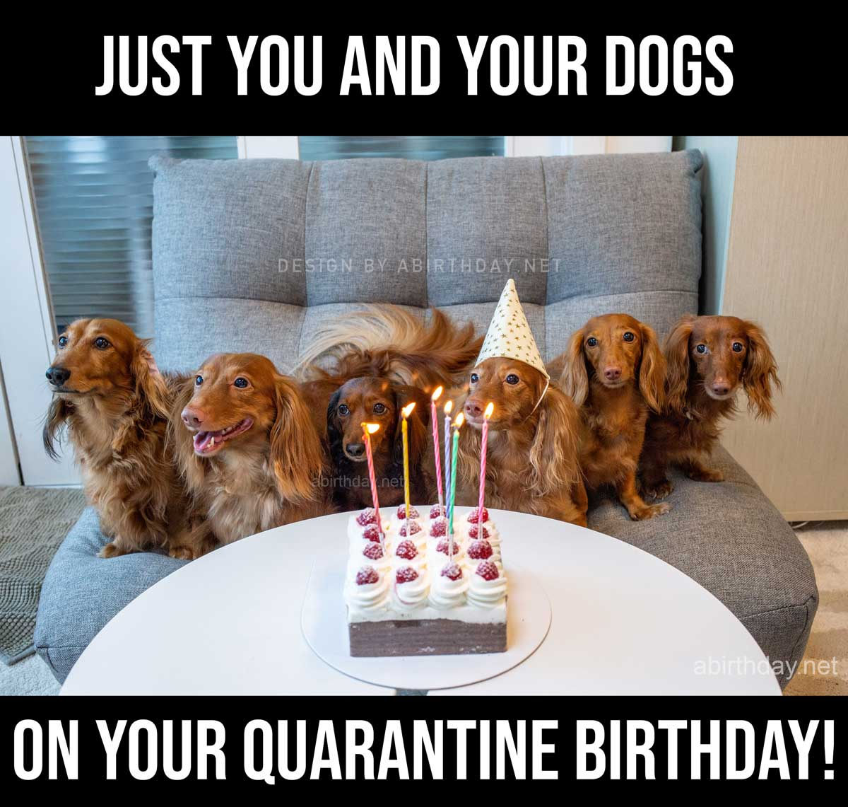 Just you and your dogs on your quarantine birthday meme