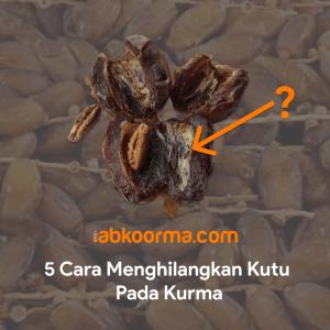 Read more about the article 5 Cara Menghilangkan Kutu pada Kurma