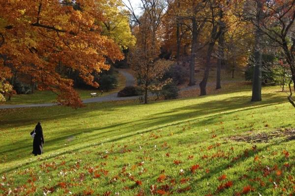 Fall-2007-NYBG-059-1024x680 New York Botanical Garden New York  New York Gardens