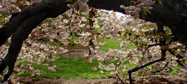 spring-03 New York Botanical Garden New York  New York Gardens