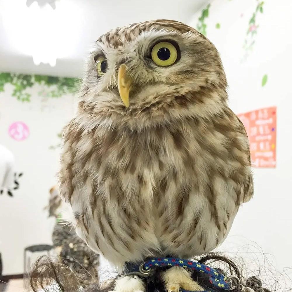 Owl Cafe 008 | Owl Cafe Tokyo