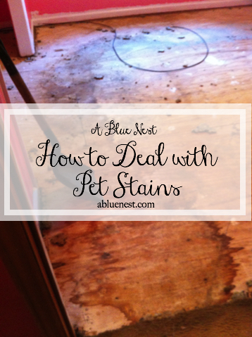 Dealing with Pet Stains