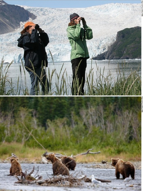Alaska Widlife