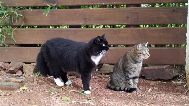 Puschel und Minnie im Hof