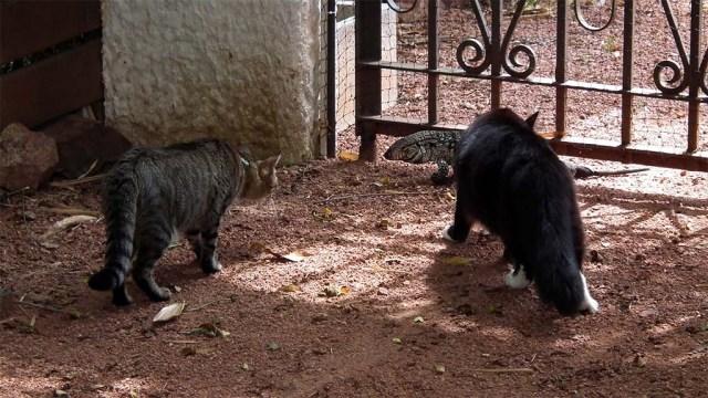Puschel & Minnie finden den kleinen Leguan sehr interessant