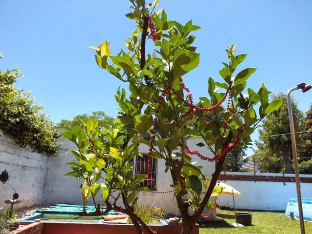 Unser Zitronenbäumchen im Garten soll natürlich auch nicht schmucklos bleiben
