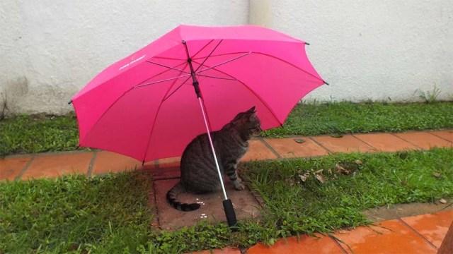Auch die Katzen suchen Schutz und sind ziemlich genervt von diesem Wetter