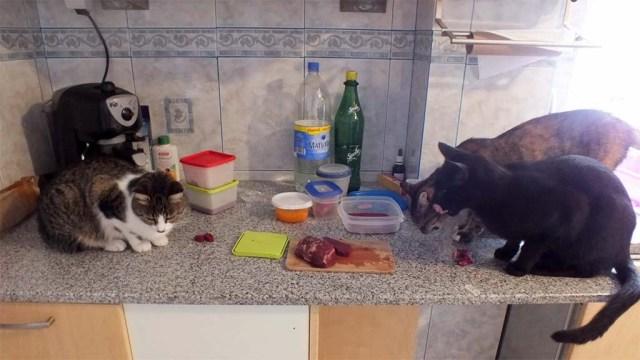 """Reste schnippeln für einen kleinen Snack: Kalea, Elua und Vader überwachen das """"Personal"""" ;-)"""