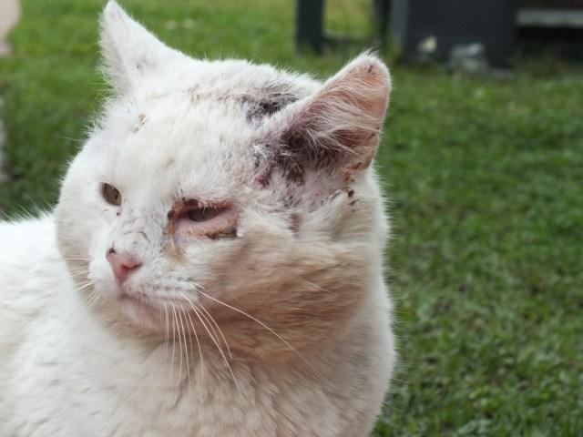"""Whitie - eine unserer """"Aussenkatzen"""""""