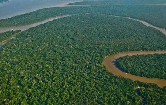 Amazonia_FlickrLubasi_CC-BY-SA-2.0.jpg