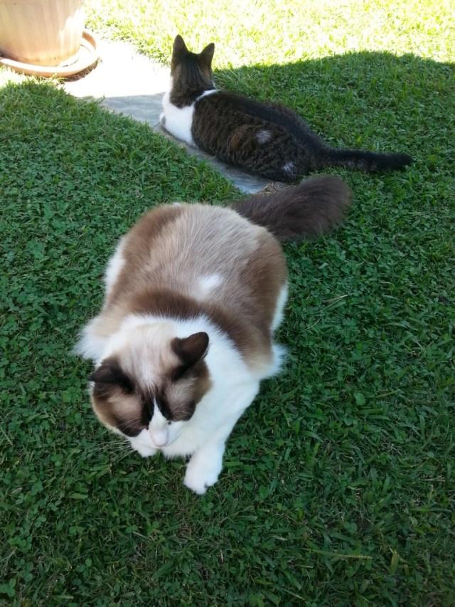 Kalea und Alice