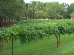 Adam's Vineyard
