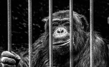 Monkey Beyond Bars - Nils Fieseler