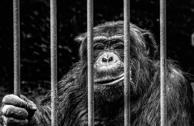 Monkey Beyond Bars - Nils Fieseler