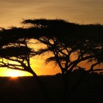African Dawn - Cry the Beloved Country