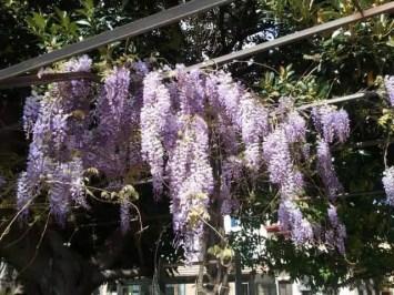 seville-flowers