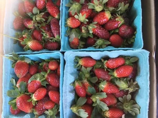 Strawberries!!