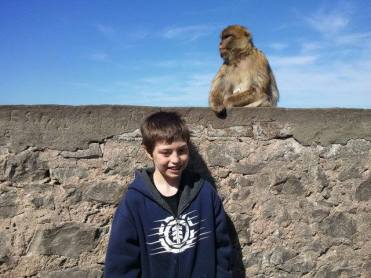 Barbary Macaques monkey