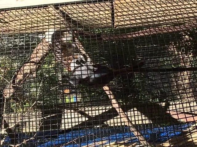 Tamarin at zoo