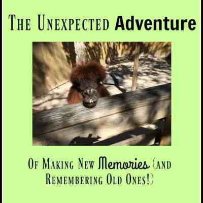 Memories ~ The Unexpected Adventure of New and Old Memories