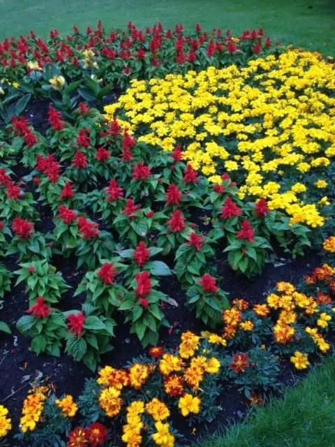 Flowers Greenwich Park
