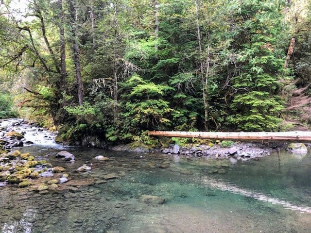 a creek in the woods in the Olympic Peninsula