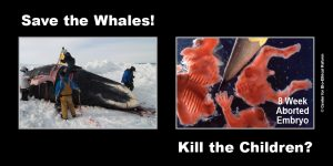 """GAP Sign - """"Save the Whales!"""""""