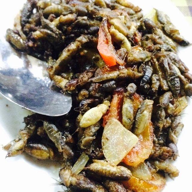 Camaru (Filipino Crickets)