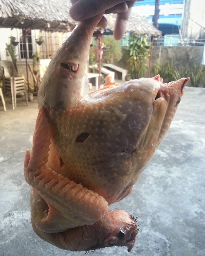 chicken freshly killed