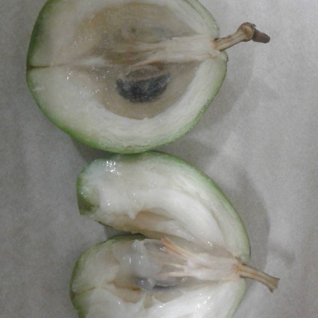 green kaimito fruit