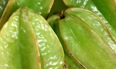 Balimbing: Fruit of the Philippines
