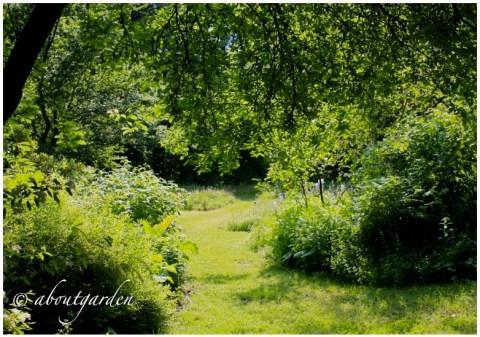 bosco-giardino