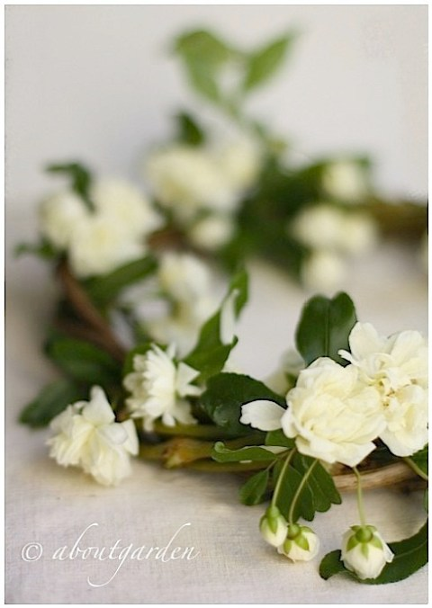 rose  Banksia wreath