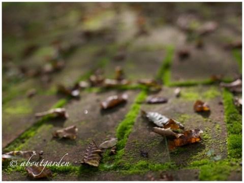 mattoni invecchiati dal tempo con muschio moss