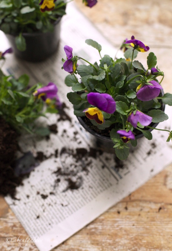 vasetti-di-violette