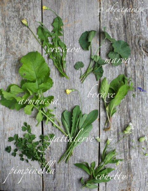 tavola botanica prebuggiun copia
