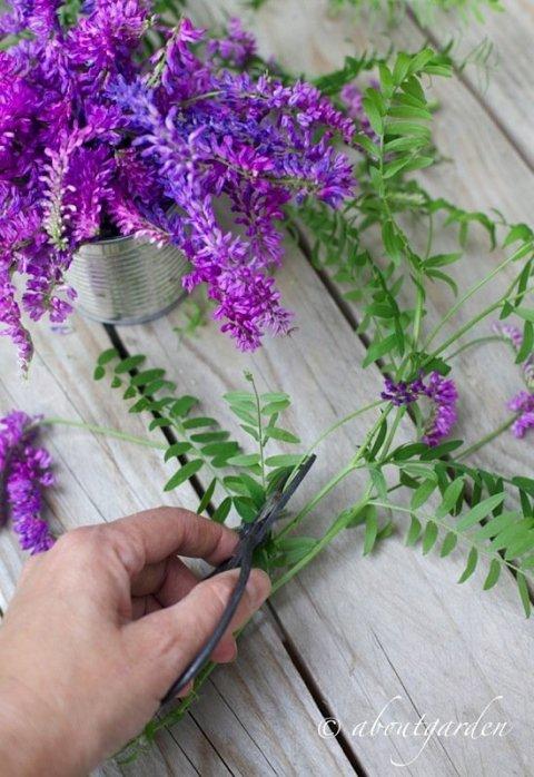 taglio fiori veccia