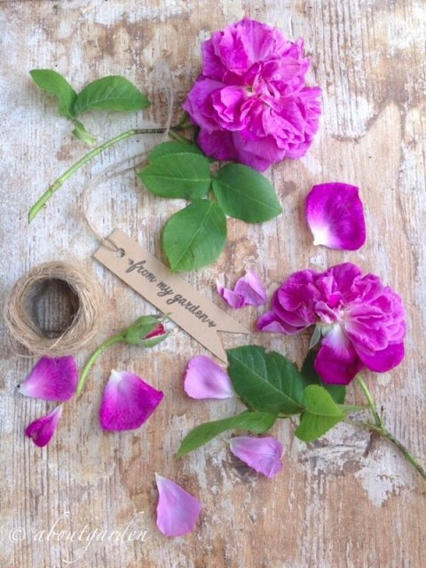 ulrtime rose