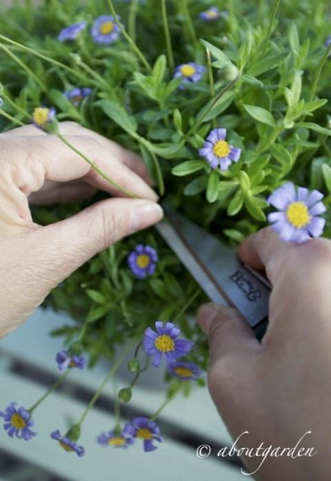 taglio fiore