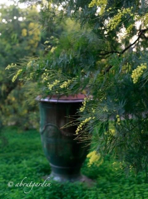 vaso di anduze