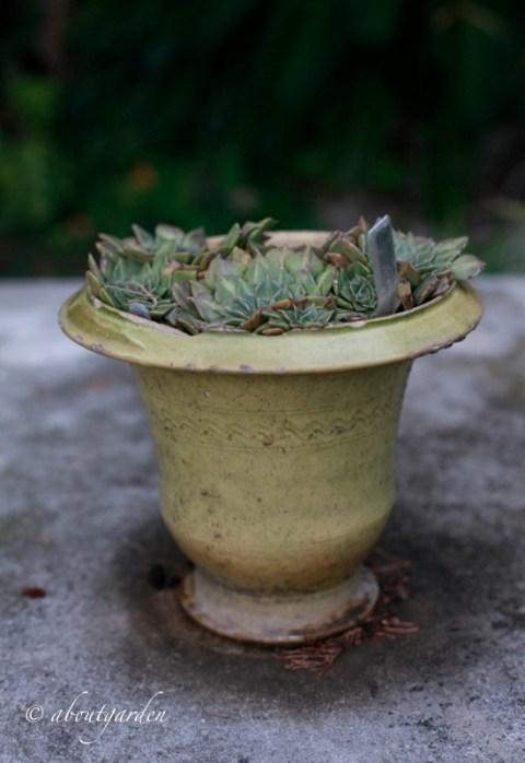 vaso piccolo Anduze