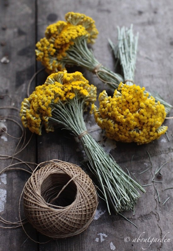 aromatic bouquet elicriso