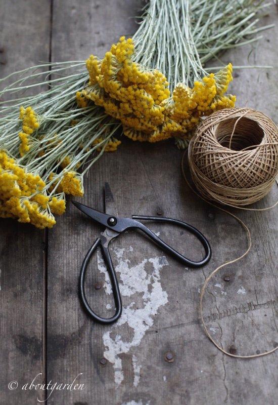 elicriso flowers