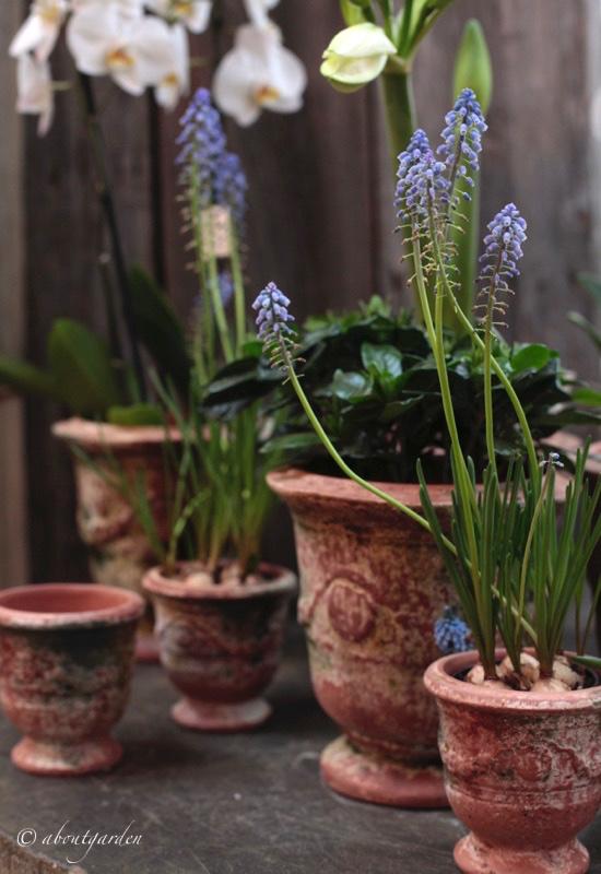 vaso anduze petersham