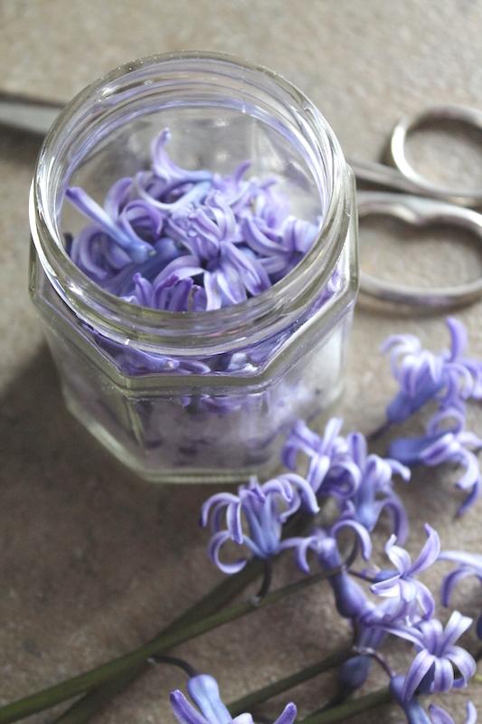 fiori di giacinto ph. Marta Moletta