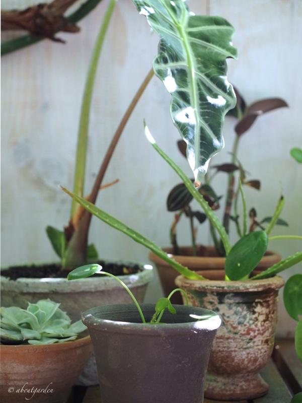 piante in vacanza