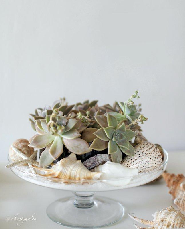 decorazione per la casa al mare con succulente conchiglie