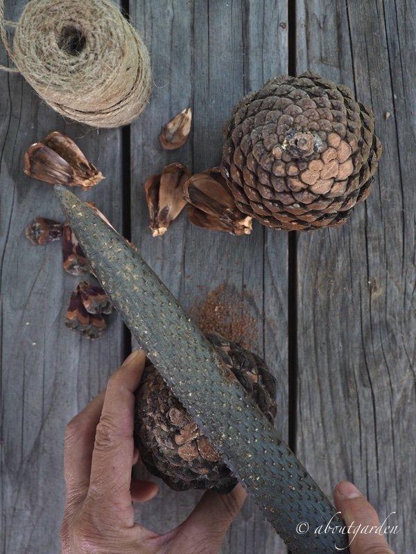 raspa per levigare il legno della pigna S. Chiarugi