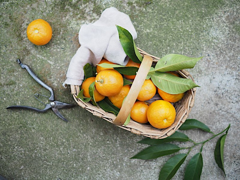 cesto di castagno con arancio amaro