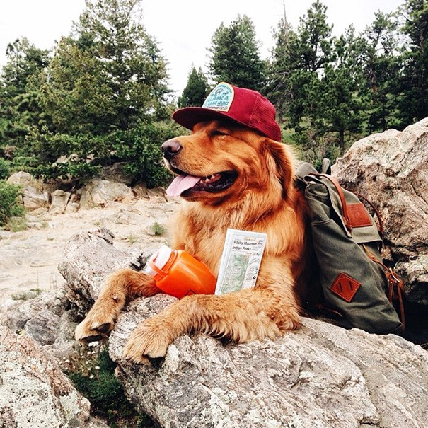 traveling-dog-aspen-the-mountain-pup-instagram-2